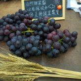 兩個小果農,從孩時生長的小農村出發 |彰化巨峰葡萄